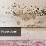 Mold inspections banner